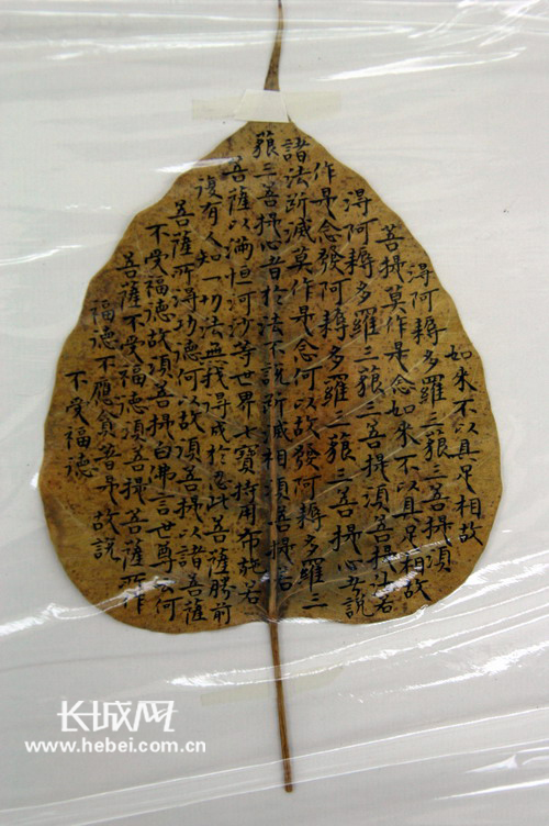 书写在菩提树叶子上的作品.长城网袁立朋摄