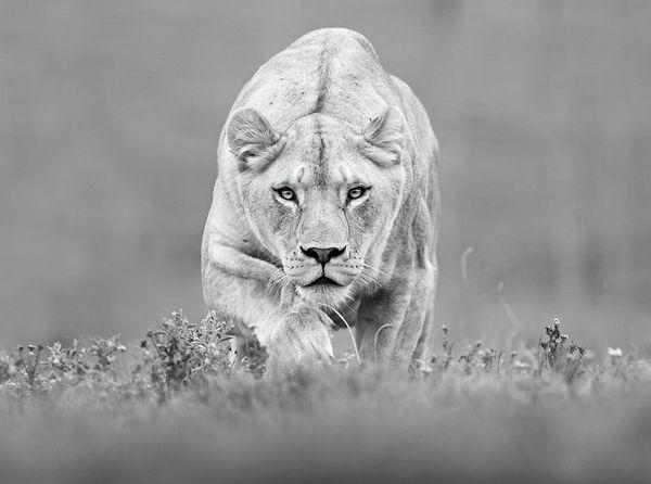 让人感动的顶级动物摄影佳作