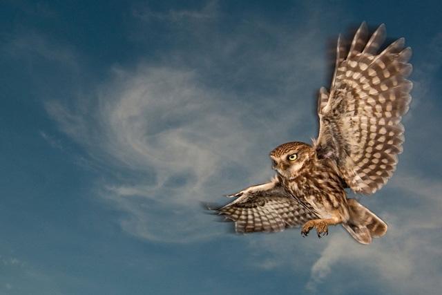 2011年德国动物摄影协会自然摄影获奖作品