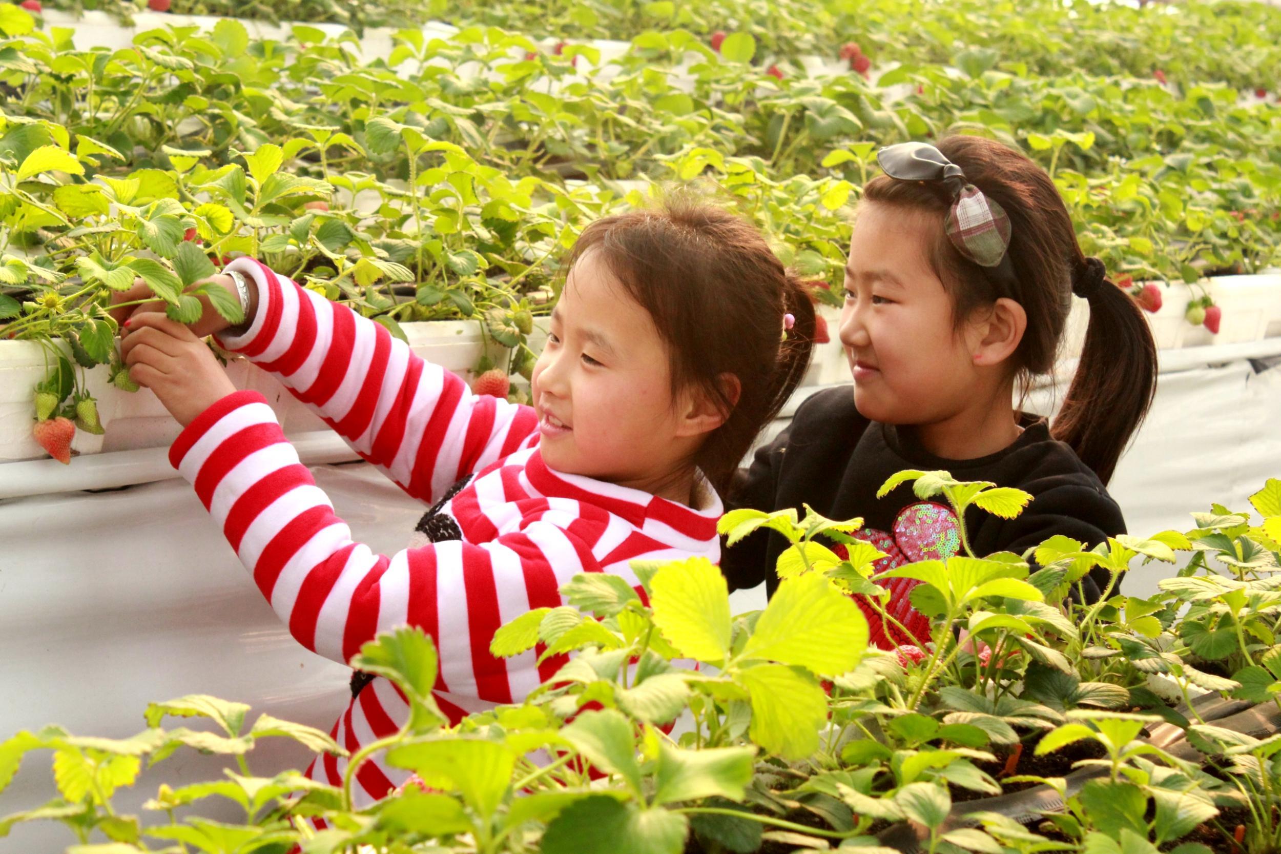 """""""中国草莓之乡·满城草莓文化苑""""观光采摘节"""