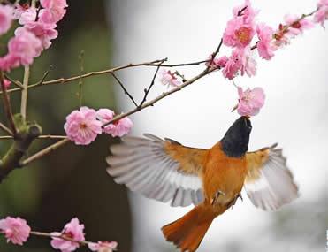 重庆进入赏花季