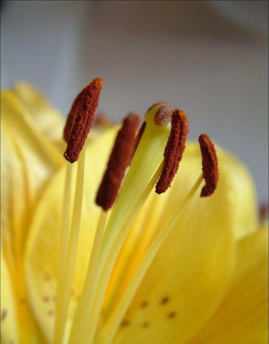 春季如何养生?教你预防春季常见疾病!