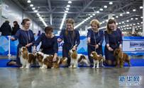 2017亚欧狗展在莫斯科举行