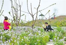 雄安新区纪行:京南花谷小镇生态优美