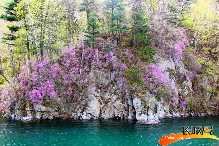 三角龙湾:山涧野杜鹃香满崖