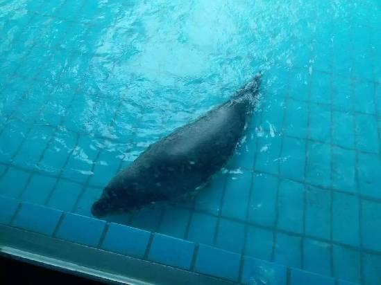 壁纸 海底 海底世界 海洋馆 水族馆 549_412