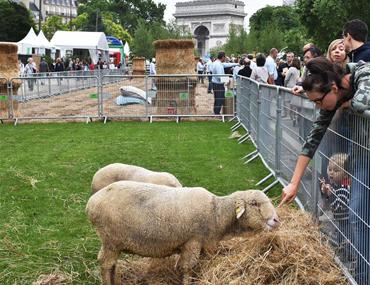 巴黎福煦大街变身生态园
