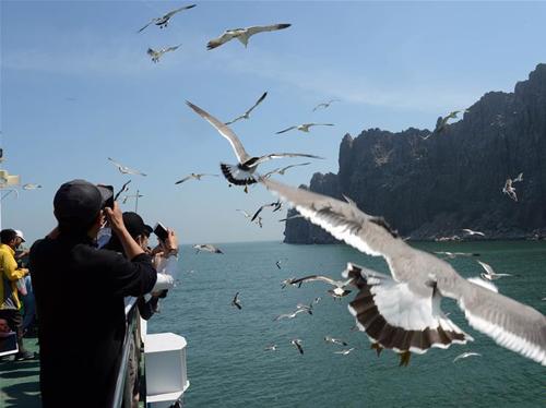 山东长岛:万鸟岛引客来