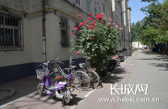 社区楼道门前施划的自行车停车位,停放整齐的自行车、电动车. 赵珊