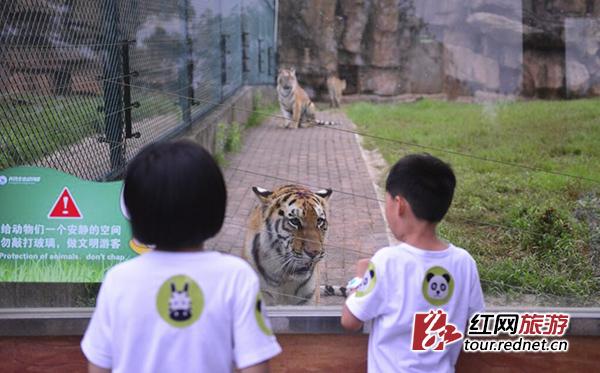 小朋友化身勇士夜宿长沙动物园 与狮虎同眠