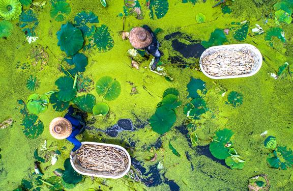 浙江湖州:新型生态农业促农民增收