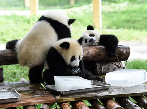 """重庆动物园助动物""""冰爽""""度夏"""