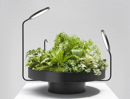 活力绿植灯饰