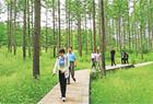 无限风光塞罕坝:百万亩森林已成旅游新热点