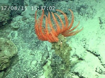 深海生物奇观