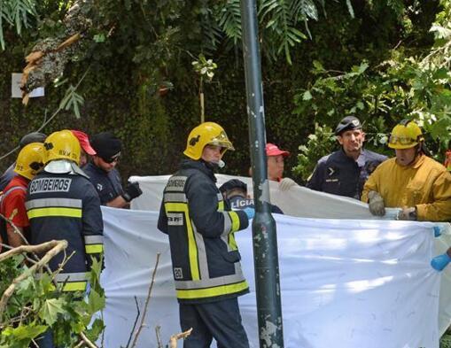 葡萄牙一大树倾倒致13人死亡