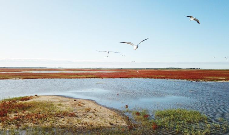吉林莫莫格:湿地旖旎秋色