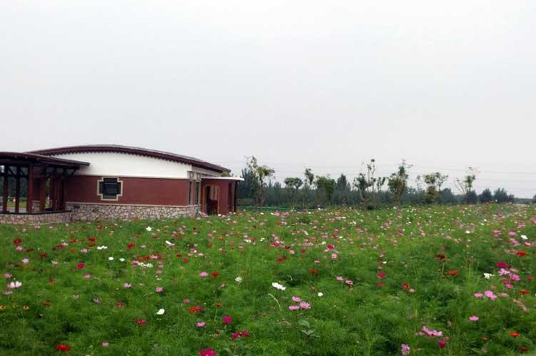 【秦皇山海 康养福地】在北纬40度欣赏花海美景