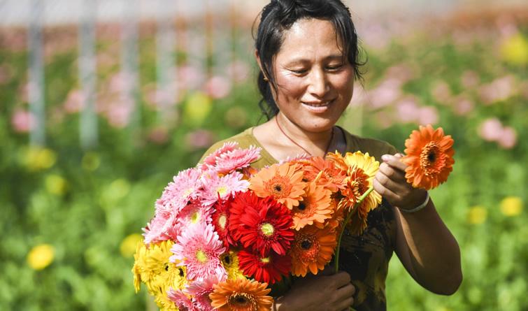 河北献县:花开致富路