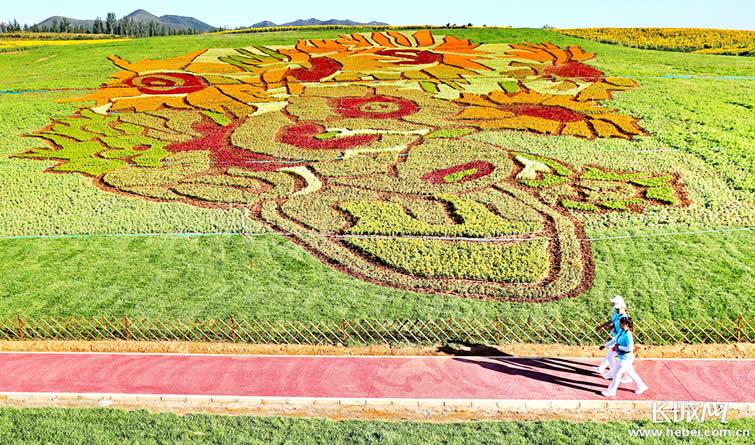 巨幅花海梵高《向日葵》亮相秦皇岛