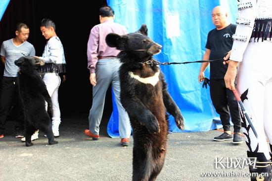 吴桥国际杂技节马戏嘉年华动物明星呆萌可爱