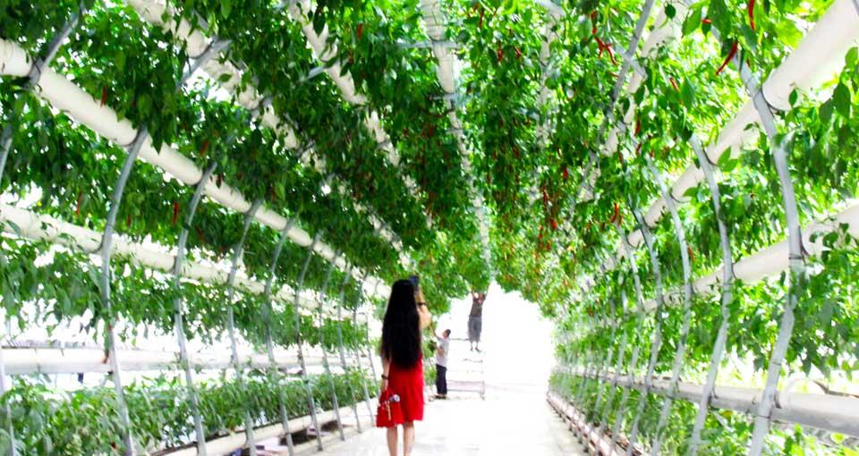美丽乡村塔元庄再添旅游新去处 现代农业科技生态园