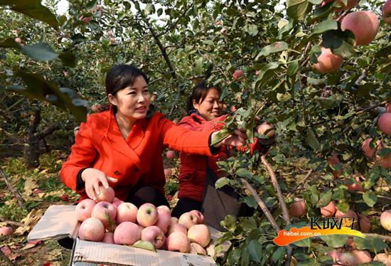 临城赵庄乡农民 :种自家的地 领农场的薪