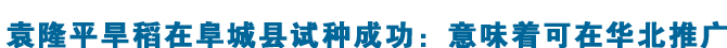 袁隆平旱稻在阜城县试种成功:意味着可在华北推广