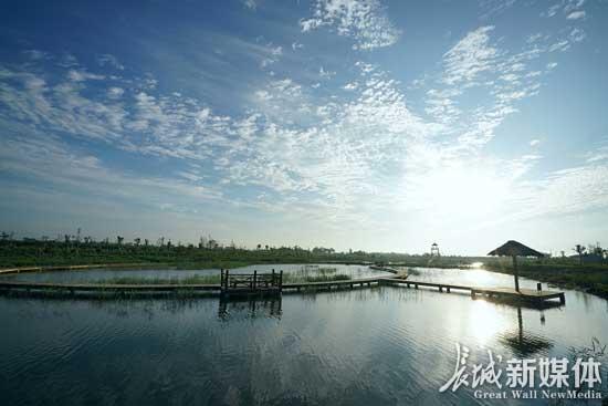 黄骅市湿地公园。