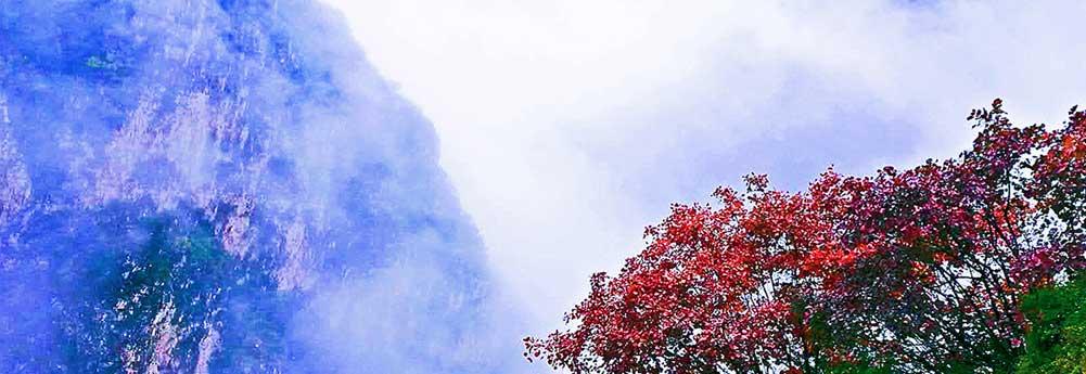 秋染云梦山 半山薄雾半山红