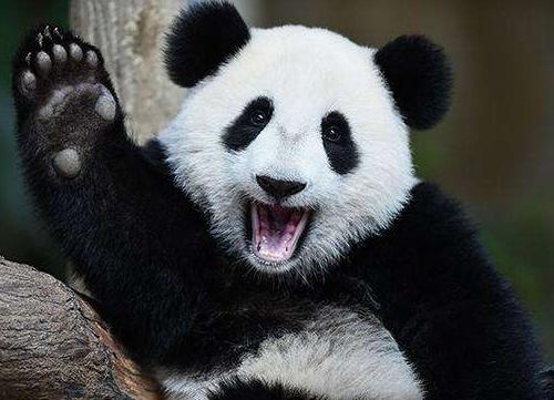 大熊猫暖暖启程回国