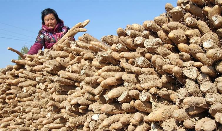 河北邯郸:冬闲不闲 脱贫增收