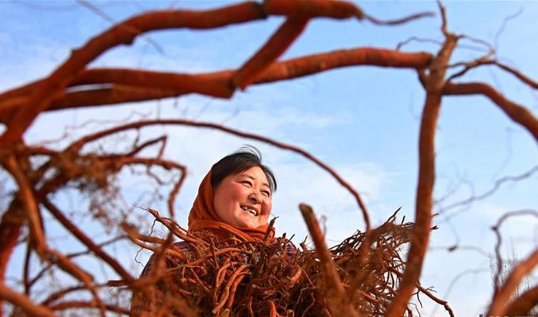山东沂源:特色产业促农民冬季增收