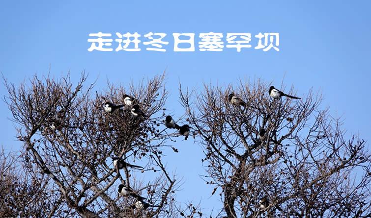 【走进冬日塞罕坝】用心感受生态的美好和生命的神奇