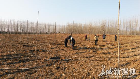 赵家圈打造万亩生态观光林