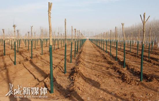 邯郸市曲周县新增造林面积1.6万亩