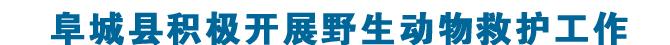 阜城县积极开展野生动物救护工作