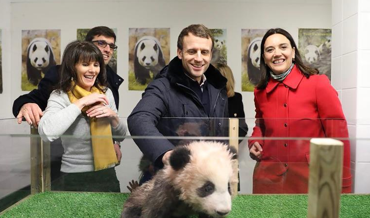 """法国总统参观大熊猫宝宝""""圆梦"""""""