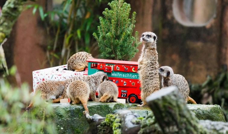 动物们的圣诞礼物