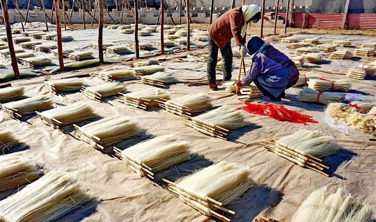 河北卢龙:粉条生产忙