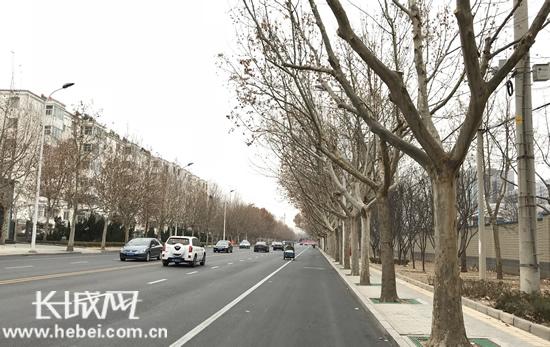 """衡水市为2万余株行道树""""美容"""""""