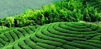 恰似春游好时刻 初春选择茶旅该去哪?