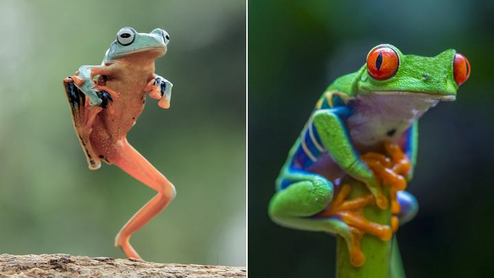 """你的""""蛙儿子""""回家了吗?看动物界蛙的日常"""