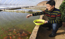 景县:发展特种养殖 走上致富之路
