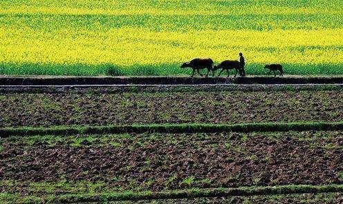 为城里人下乡买房划红线 为农民利益不受损守底线