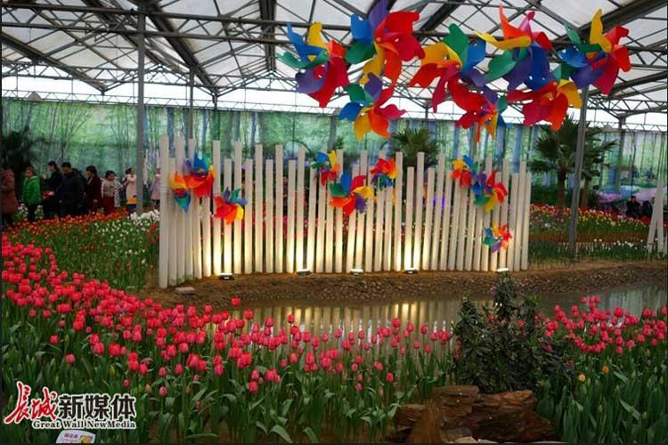 长城拍客:到植物园看花展 百花相伴过大年
