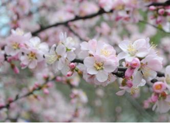 三月春游好去处 棋盘山