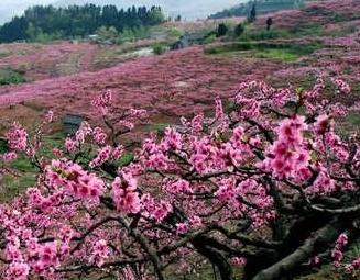 三月春游好去处 天桂山
