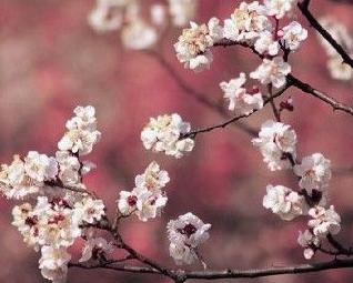 三月春游好去处 石家庄科技大学新校区