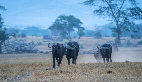 索尼全画幅微单™旗舰A9 再探神秘非洲大陆
